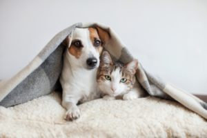Who Gets the Family Pets after a Divorce in Florida? pets 0 300x200